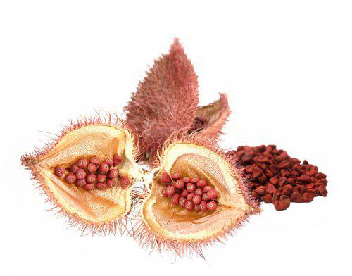coloring with annatto seeds, bixin, norbixin, natural color, natural food colorants, bioconcolors