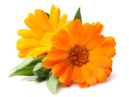 Bioconcolors, Lutein, Mari-Gold, colouring foodstuff, natural colors,