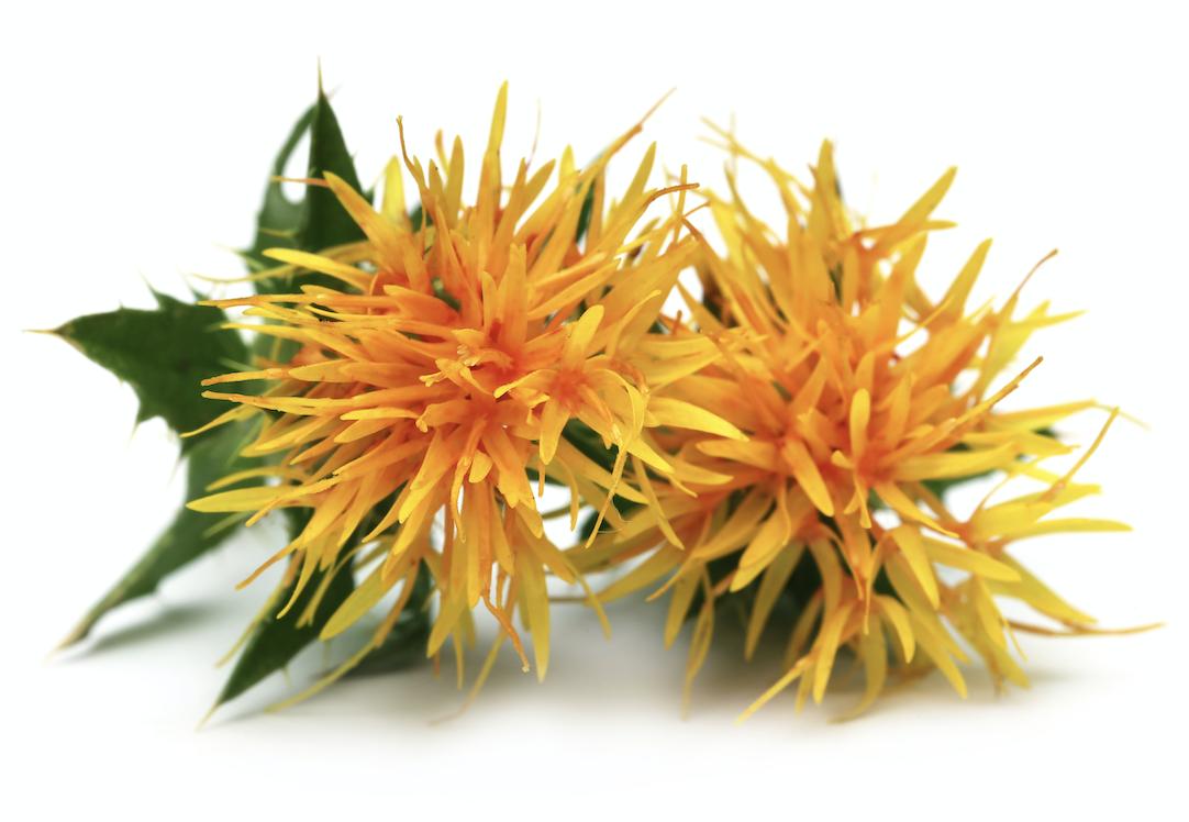 safflower, natural color, colouring foodstuff, food colorant, BioconColors